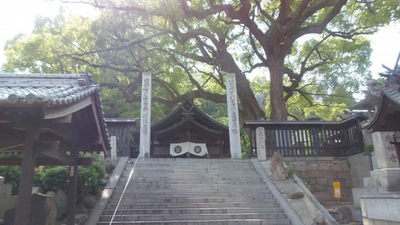 尾道寺院とクスノキ