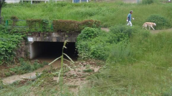 泥水の河川、八木地区